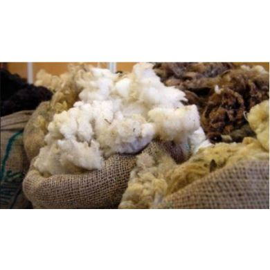 WoolConcept - 100% laine de mouton belge sac de laine brute 10kg